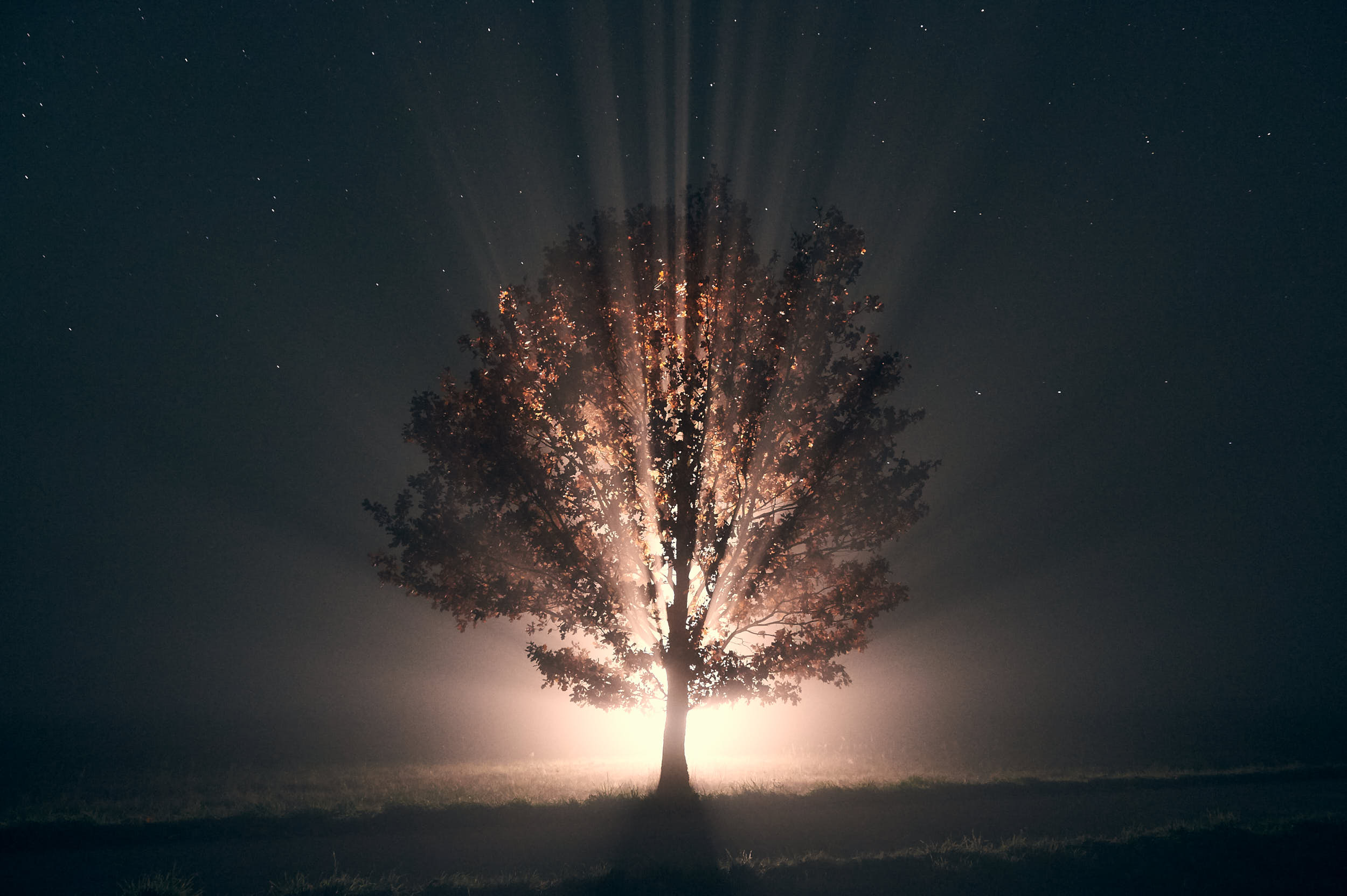 Night landscape photography: solitary tree on a meadow with magical light coming from behind.