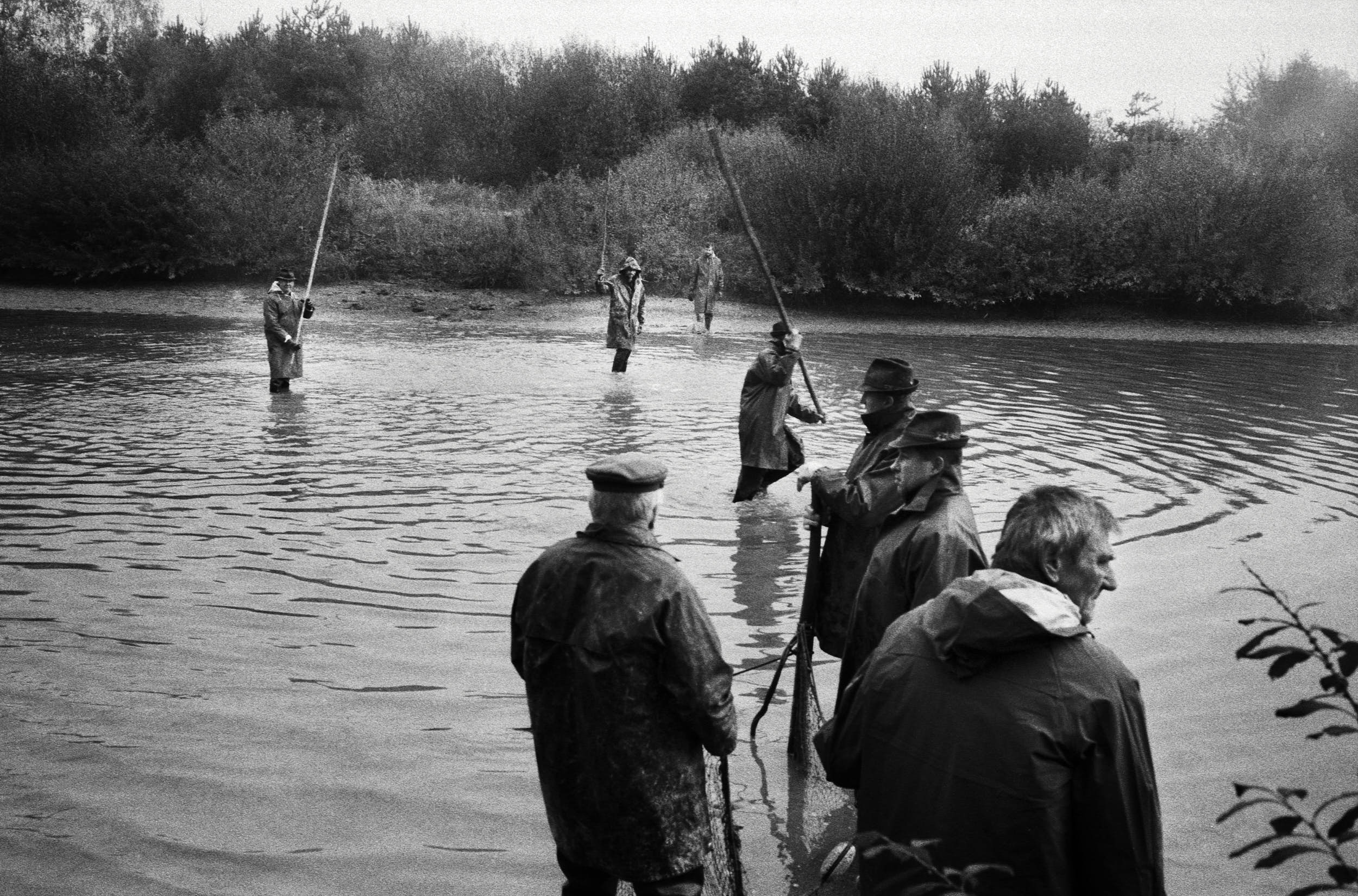 Group of fishermen in a pond preparing for an annual catch.