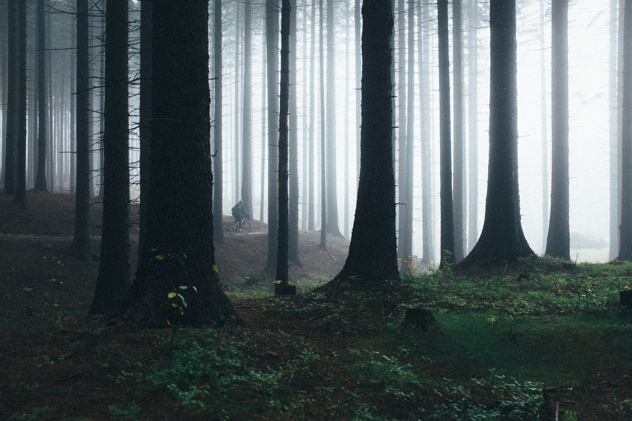 Moody travel photography: mountainbiker riding through misty forest.