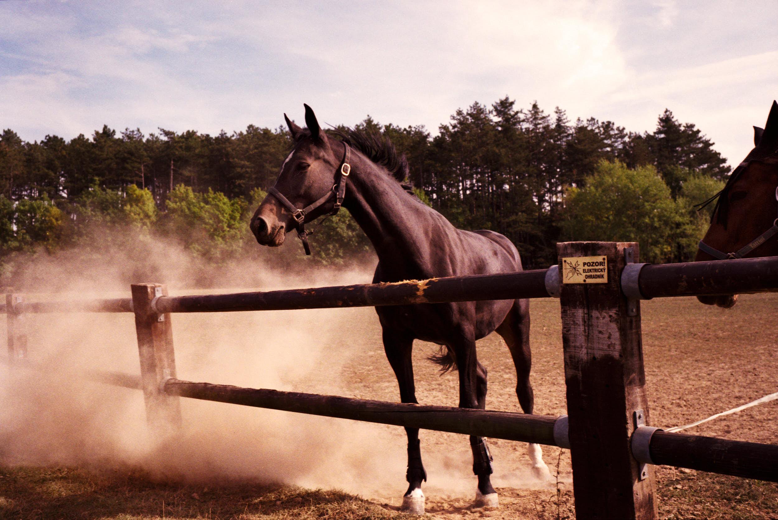 Horse in settling dust.
