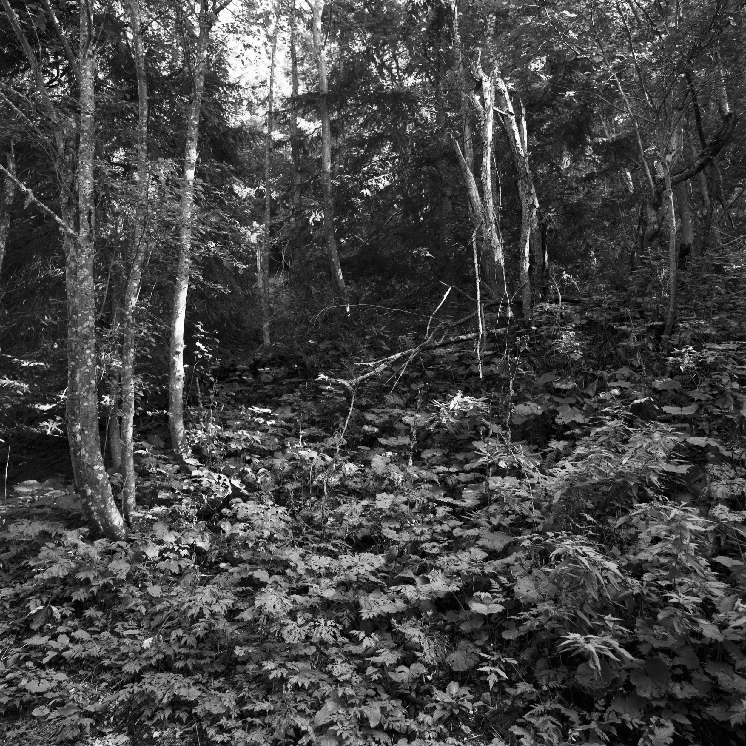 Film landscape photography: alpine forest.