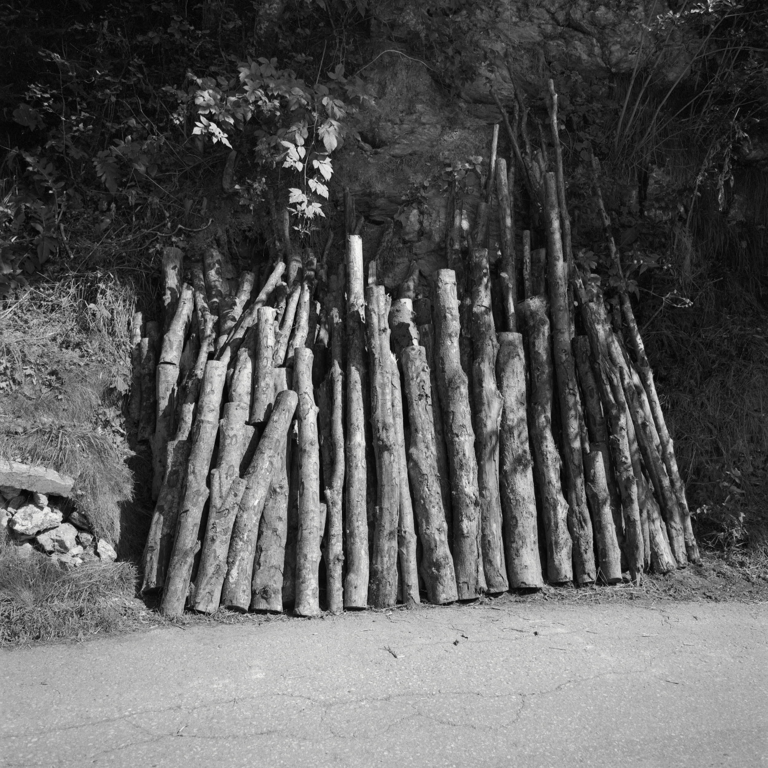Tree logs aligned on the side of a road. Shot on black and white medium format film.